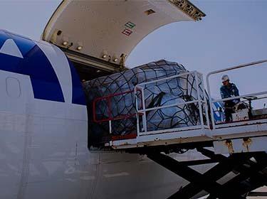 Services|ANA Cargo
